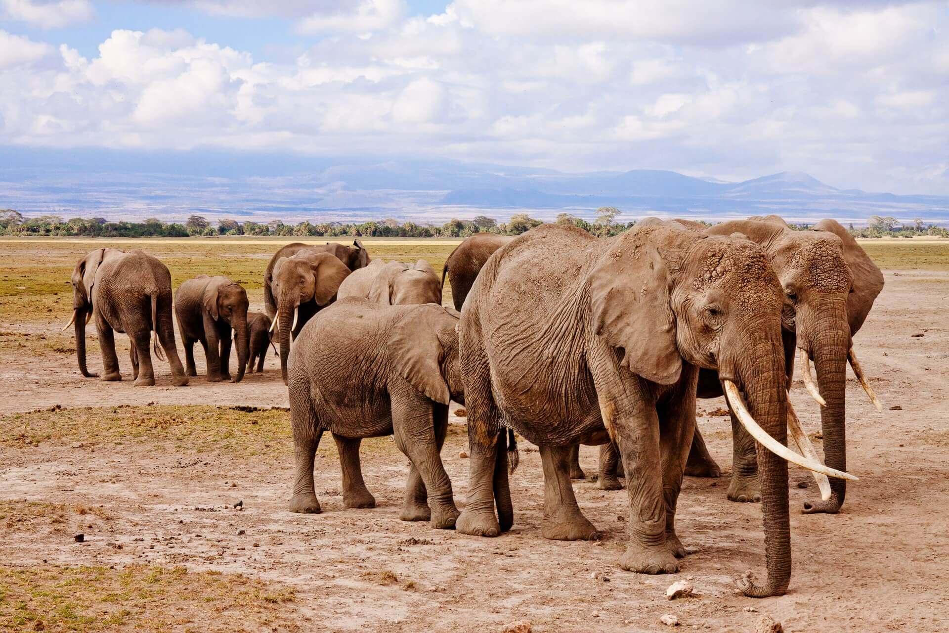 Top 10 Tourist Attractions in Kenya