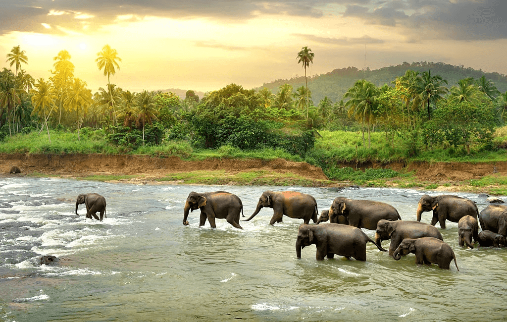 Tourist Attractions in Sri Lanka