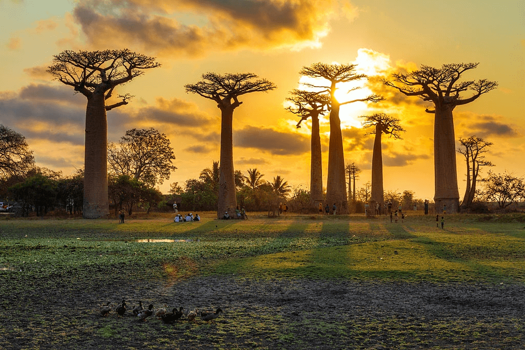 Tourist Attractions in Madagascar